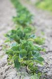 Vegetable seedling Stock Image