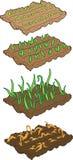 Vegetable seedlings Stock Images