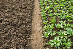 Vegetable seedlings Royalty Free Stock Images