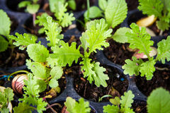 Vegetable seedlings in black plastic pots Stock Photos