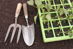 Vegetable seedlings closeup  growing in tray Stock Images