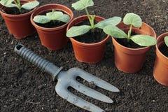 Vegetable seedlings closeup  in pots Stock Photo