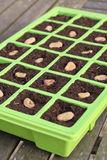 Vegetable seeds tray. Green Vegetable seeds tray closeup Royalty Free Stock Images