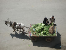 Vegetable seller in Egyot Stock Images