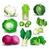Vegetable set with cabbages Stock Image