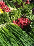 Vegetable layout on the market counter: green onions, red radishes, lettuce, curly parsley, purple Basil, fresh sorrel royalty free stock photos