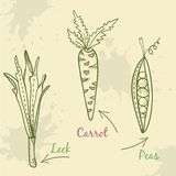 Vegetable set illustration. Leek, carrot and peas. Sign  hand drawn illustration. Ingredients in kitchen Stock Images