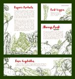 Vegetable banner with veggies, bean, mushroom. Vegetable sketch banner of cabbage and veggies. Cabbage, broccoli and onion, eggplant, garlic and radish, potato Stock Photography