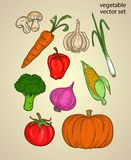 Vegetable sketch or ingredient with colorful set. PRINT DOODLE VECTOR OR element Royalty Free Stock Photo