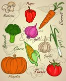 Vegetable sketch or ingredient with colorful set. PRINT DOODLE VECTOR OR element Stock Photo