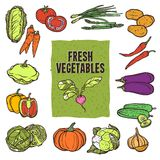 Vegetable Sketch Set Royalty Free Stock Photo