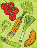 Vegetable sketches Stock Images