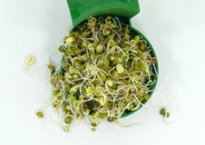 Vegetable sprouts Stock Photos