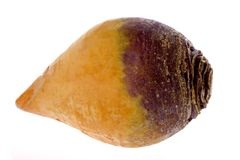 Vegetable - Swede Royalty Free Stock Photography
