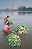 Vegetable and Taj Mahal. Village boys washing radish in Yamuna river Stock Photo