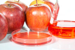Vegetable test, Genetic Modification,apple. Vegetable test, apple, Genetic Modification, Scientific Experiment stock photos