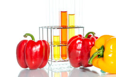 Vegetable test, Genetic Modification, Pepper. Vegetable test, Pepper, Genetic Modification, Scientific Experiment royalty free stock images
