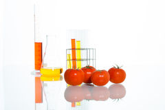 Vegetable test, Genetic Modification, tomato. Vegetable test, tomato, Genetic Modification, Scientific Experiment stock photo