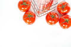 Vegetable test, Genetic Modification, tomato. Vegetable test, tomato, Genetic Modification, Scientific Experiment royalty free stock photo