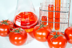 Vegetable test, Genetic Modification, tomato. Vegetable test, tomato, Genetic Modification, Scientific Experiment stock image