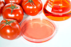 Vegetable test, Genetic Modification, tomato. Vegetable test, tomato, Genetic Modification, Scientific Experiment stock images