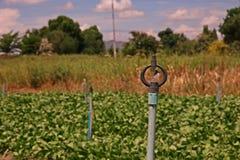 Vegetable test plot. Test for pesticide,fertilizer before introduce to market Stock Image