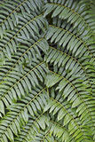 Vegetable texture of fern leaves Royalty Free Stock Photos