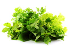 Vegetable for thai food Stock Photography
