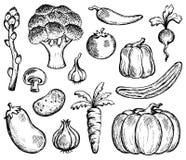 Free Vegetable Theme Collection 2 Stock Photos - 31538263