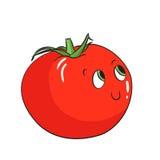 Vegetable tomato vector illustration Stock Photos