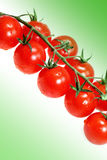 Vegetable tomatoes Royalty Free Stock Photos