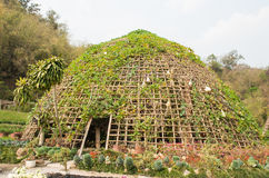 Vegetable tunnel . Vegetable tunnel at Chiang Mai, Thailand Royalty Free Stock Photography