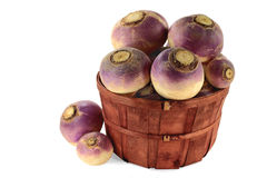 Vegetable Turnip roots Royalty Free Stock Photo
