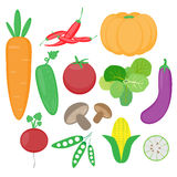 Vegetable vector set Royalty Free Stock Photos