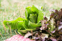 Vegetable. S placed on a cloth on the grass Stock Photography