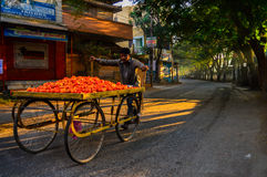 Vegetable vendor bike on streets Royalty Free Stock Photo