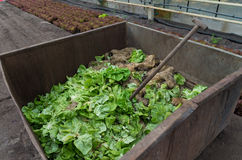 Vegetable waste Stock Photos