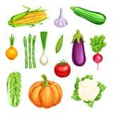 Vegetable watercolor icon of organic farm veggies Stock Photos