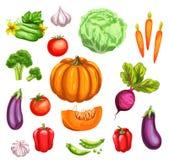 Vegetable watercolor set of fresh organic veggies Royalty Free Stock Photos