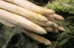 Vegetable white asparagus Royalty Free Stock Image