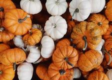 Vegetable, Winter Squash, Cucurbita, Pumpkin