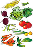 Vegetables. Stock Image