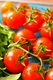 Vegetables. Banch of cherry tomatoes with ruccola Royalty Free Stock Images