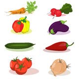 Vegetables. Set of Vegetables of tomato, mushroom, onion, carrot, chili, eggplant Stock Image