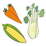 Vegetables. Illustration of a carrot - a fennel - a corncob Stock Image