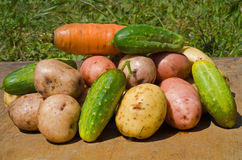 Vegetables 19 Royalty Free Stock Photos