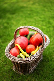 Vegetables. Basket full of vegetables from the garden stock photography