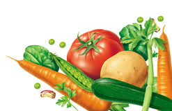 Vegetables. Falling vegetables on a white background Stock Image