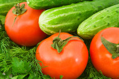 Vegetables. Cucumbers, tomatoes and greens, close up Royalty Free Stock Photo