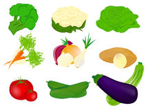 Vegetables. Vector illustration of different vegetables Royalty Free Stock Photo